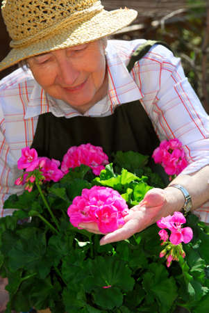 Senior woman with a pot of geranuim flowers in her garden, focus on hand and flowers photo