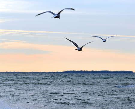 Meeuwen vliegen over de oceaan op rustige zonsondergang
