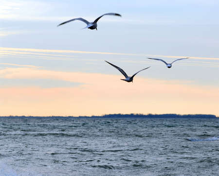 Seagulls flying over ocean at quiet sunset Imagens