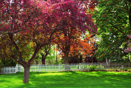 Spring rural landsccape with white picket fence and blooming apple trees Stock Photo - 935597