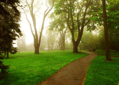 treed: Path in a green foggy park in the spring