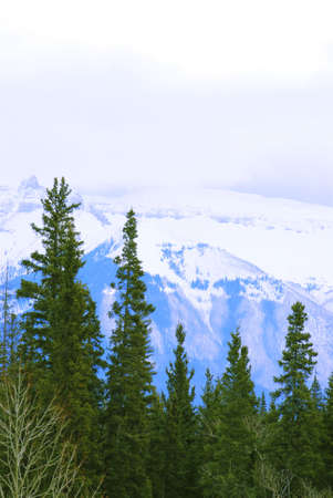 Landscape of high snowy mountains with evegreen trees photo