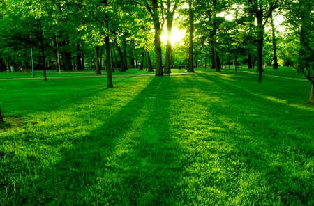 backlit: Lage ondergaande zon in het groen park casting lange schaduwen Stockfoto