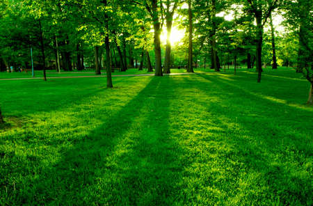 backlit: Low setting sun in green park casting long shadows Stock Photo