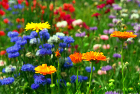 Background of colorful mixed flowers growing in a garden Stock Photo