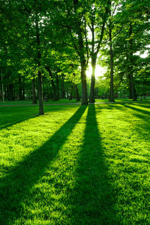 Green park with long shadows from setting sun Stock Photo - 1327230