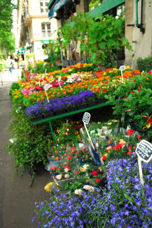sidewalk sale: Colorful flower stand on a sidewalk in Paris, France.