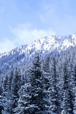 treed: Winter mountains covered with snowy fir trees