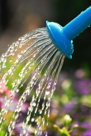 Water pouring from blue watering can onto blooming flower bed photo
