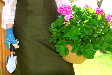 Woman in gardening apron carrying pot with geraniums Stock Photo - 1425049