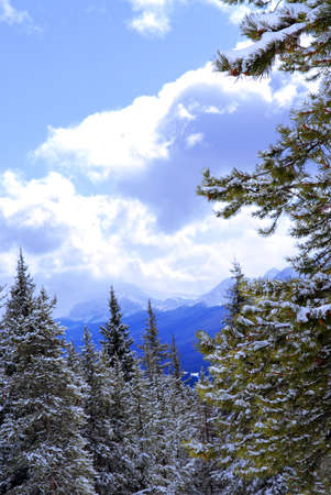 Snowy mountains and snow covered trees in Canadian Rockies photo