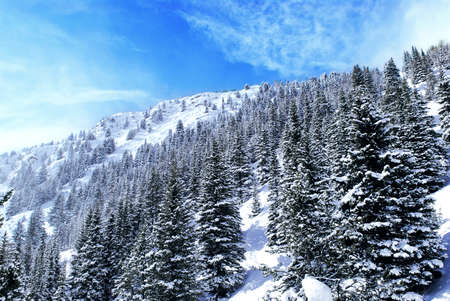 rockies: Winter mountain landscape with spruce trees in Canadian Rockies