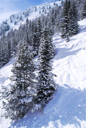 Downhill skiing tracks among fir trees in winter Canadian Rocky mountains Stock Photo - 1439311