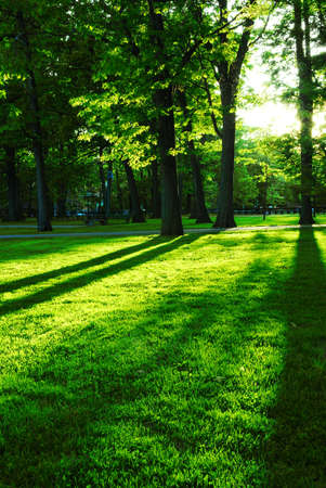 setting sun: Green summer park with long shadows from setting sun Stock Photo