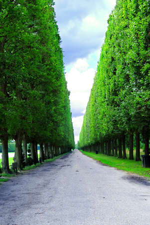 Line of sculpted trees along the path in Vesailles gardens, France. photo
