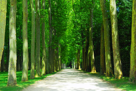 surrounded: Road surrounded by old green trees in Versailles gardens, France. Stock Photo