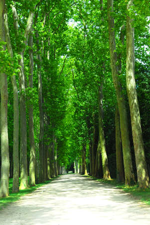 treed: Road surrounded by old green trees in Versailles gardens, France. Stock Photo