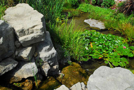 back yard pond: Pond landscaping with aquatic plants and natural rocks