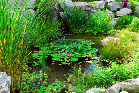 back yard pond: Natural stone pond lanscaping with aquatic plants and water lilies
