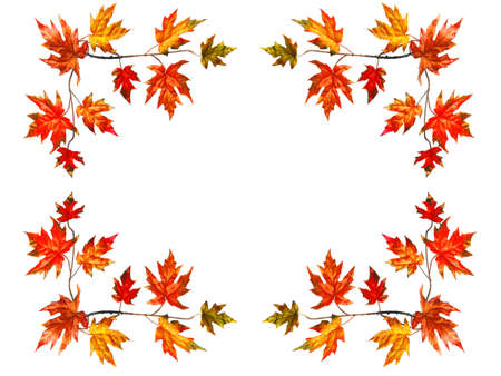 fall leaves on white: Frame background with red fall maple leaves