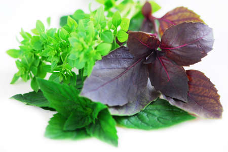 Various types of basil herb on white background photo