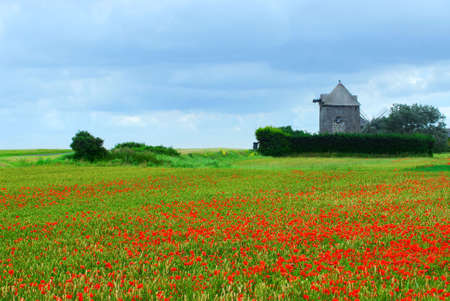 Landscape of an old windmill in a blooming poppy field in Brittany, France.