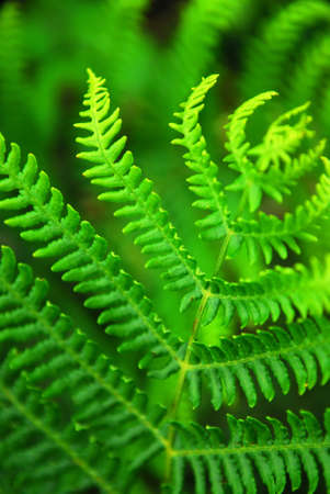 Closeup on a green leaf of a fern growing in woodland