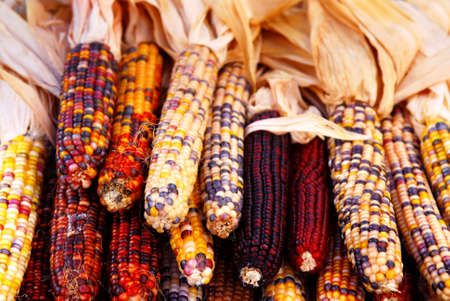 Pile of indian corn on farmers market in the fall photo