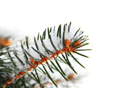Christmas background with snowy spruce tree branch isolated on white Stock Photo - 1867964