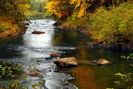 algonquin park: Forest river in the fall. Algonquin provincial park, Canada.