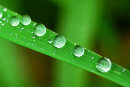 Big water drops on a green grass blade, extreme macro photo