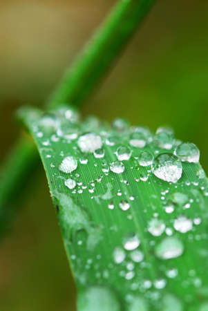 Big water drops on a green grass blade, macro Stock Photo - 2072963