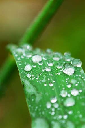 Big water drops on a green grass blade, macro Stock Photo - 2072963