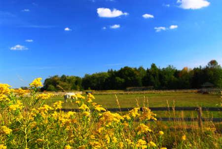 alergenos: Rural verano paisaje que florece con la ambros�a en primer plano