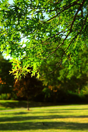 leafy: Green leafy tree branch  in summer park Stock Photo