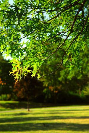 country park: Rama de �rbol frondoso verde en el Parque de verano