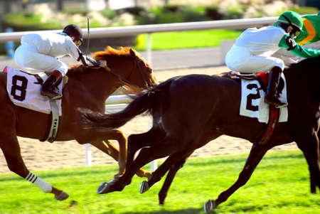 racehorses: Jockeys racing thoroughbred horses on a turf racetrack Stock Photo