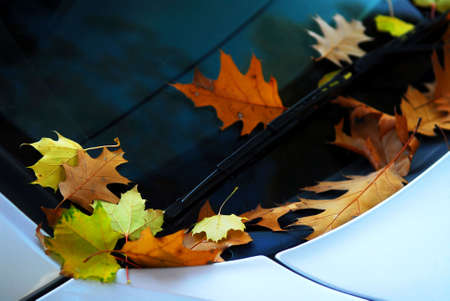 Fallen autumn leaves on the windshield of a car Stock Photo - 2130817