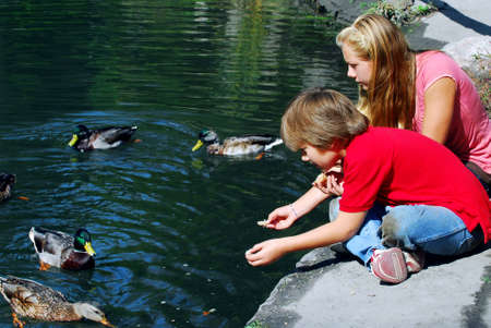 swimming bird: Children feeding ducks at the pond in a park