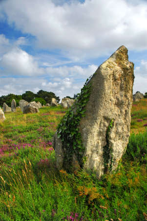 alignments: Green vines on prehistoric megalithic monuments menhirs in Carnac area in Brittany, France