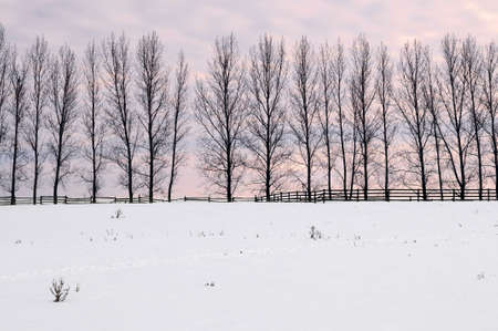 Winter landscape with a row of tall trees at sunset Stock Photo - 2338259