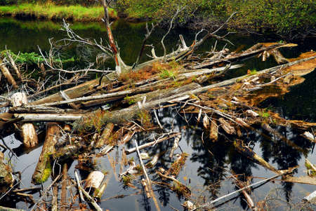 Driftwood in a forest river in Algonquin provincial park, Canada photo