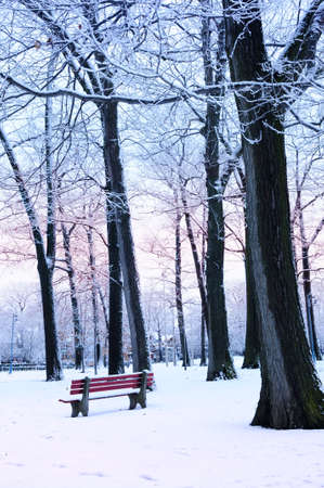Winter park covered with snow at dusk. Beach area, Toronto, Canada. photo