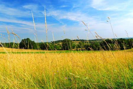 Vista panorámica sobre el paisaje agrícola de verano en la Francia rural
