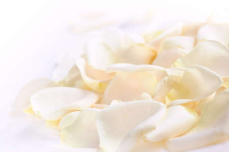 Abstract background of fresh white rose petals Stock Photo - 2483432