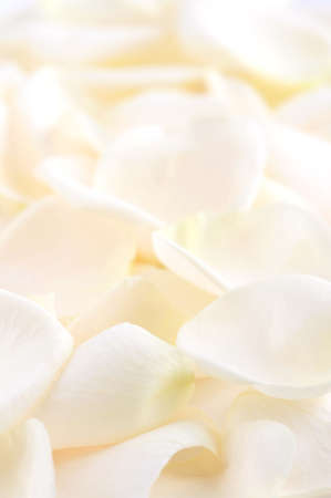 Abstract background of fresh pale rose petals photo