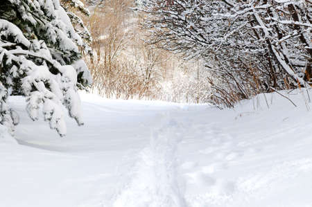 Path in winter forest after a snowfall Stock Photo - 2567834