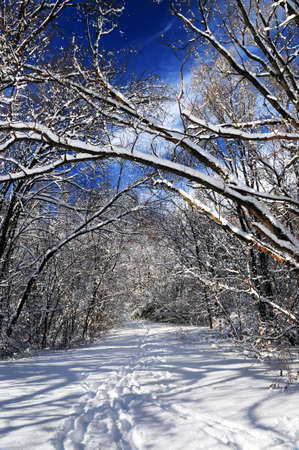 Recreational path in winter forest after a snowfall photo