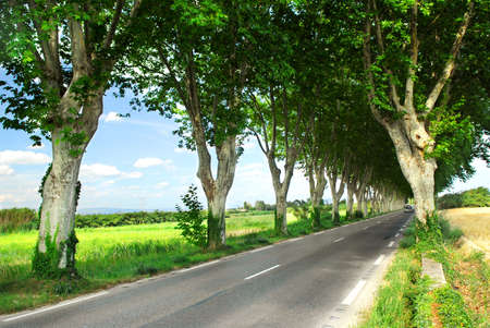 sicomoro: Paese strada fiancheggiata da alberi di sicomoro nel sud della Francia