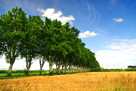 Landscape with a country road lined with sycamore trees in southern France photo